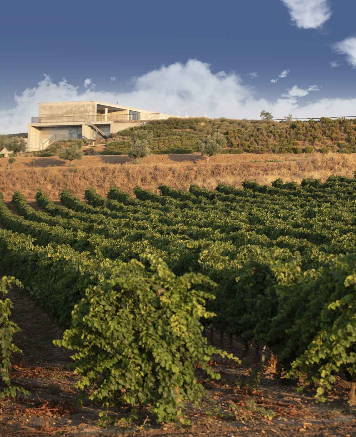 Ruta del vino de DO Rueda, turismo del vino en Finca Montepedroso